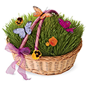 Living Grass Set in Wicker Basket