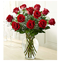 Dozen Premium Long Stem Red Roses