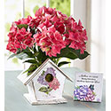 Bird House of Blooms with Pink Hydrangea