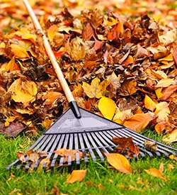 Getting Your Yard Fall Ready